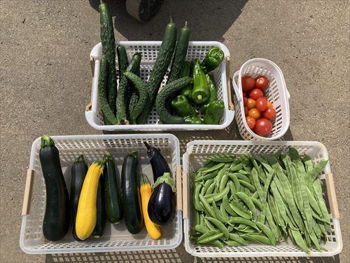 2020年8月5日今日の収穫_R.jpg